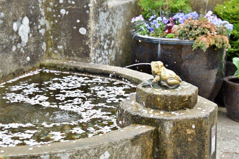 Les pétales tombés de fleur de cerise flottent sur l'eau images libres de droits