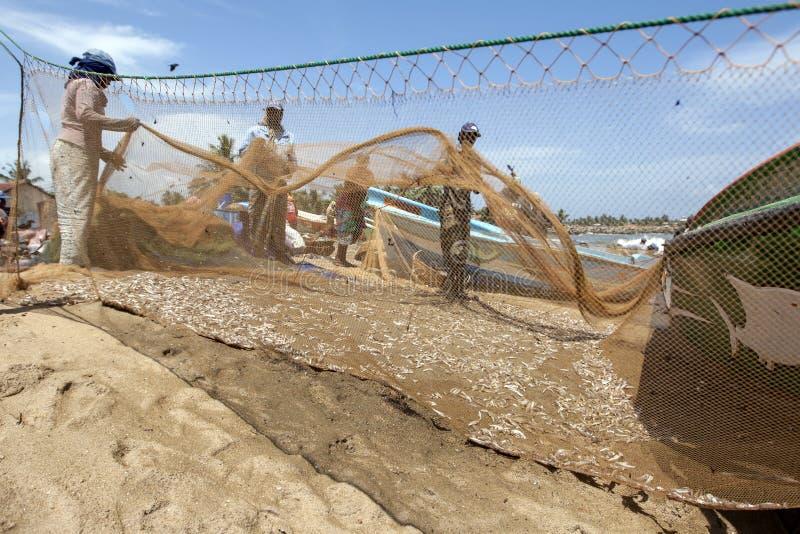 Les pêcheurs et les femmes assortissent des poissons de leurs filets sur la plage chez Negombo dans Sri Lanka photos stock