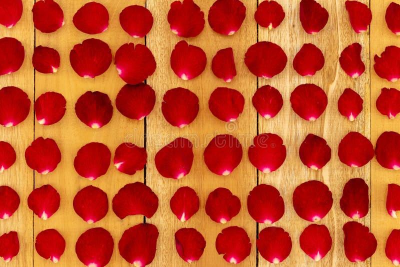 Les p?tales de rose ont arrang? dans un mod?le photos stock