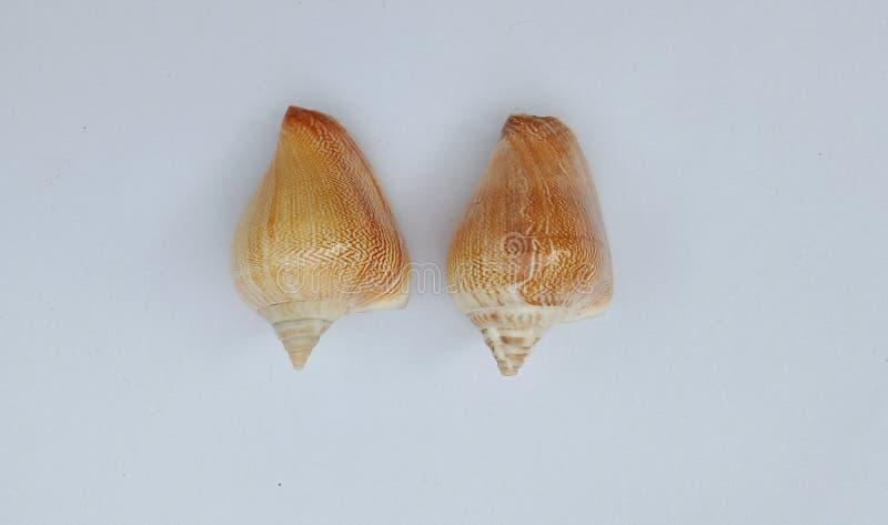 Les paires de coquilles avec le fond texturisé gris wallpaper, photo stock