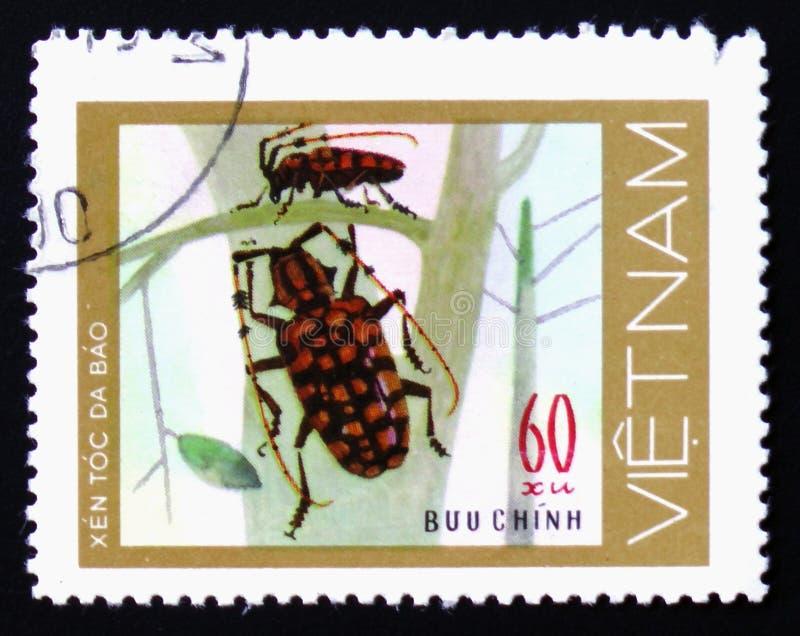 Les paires de vert ont repéré des scarabées avec la longue antenne sur les usines sans feuilles, vers 1977 images stock