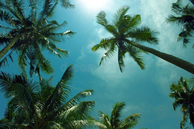 Les palmiers atteignent au fond tropical de ciel images libres de droits