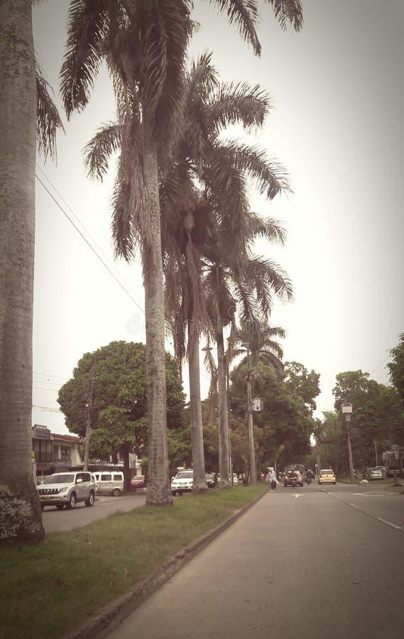 Les palmiers de la branche de ciel photo stock
