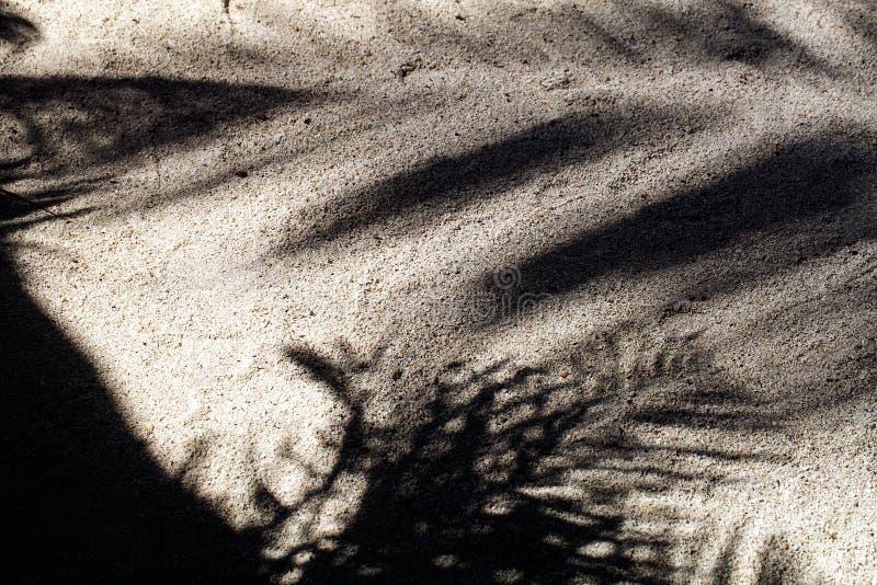 Les palmiers ont moulé des ombres sur le sable blanc lisse d'une plage tropicale à distance d'île image libre de droits