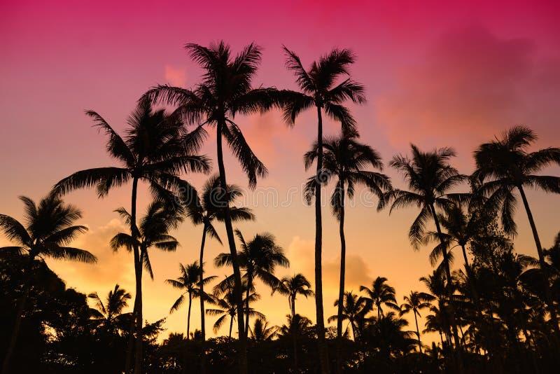 Les palmiers silhouettent sur la plage tropicale de coucher du soleil sur Hawaï photographie stock