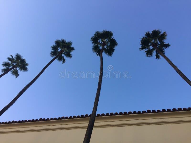 Les palmiers sont la vie images libres de droits