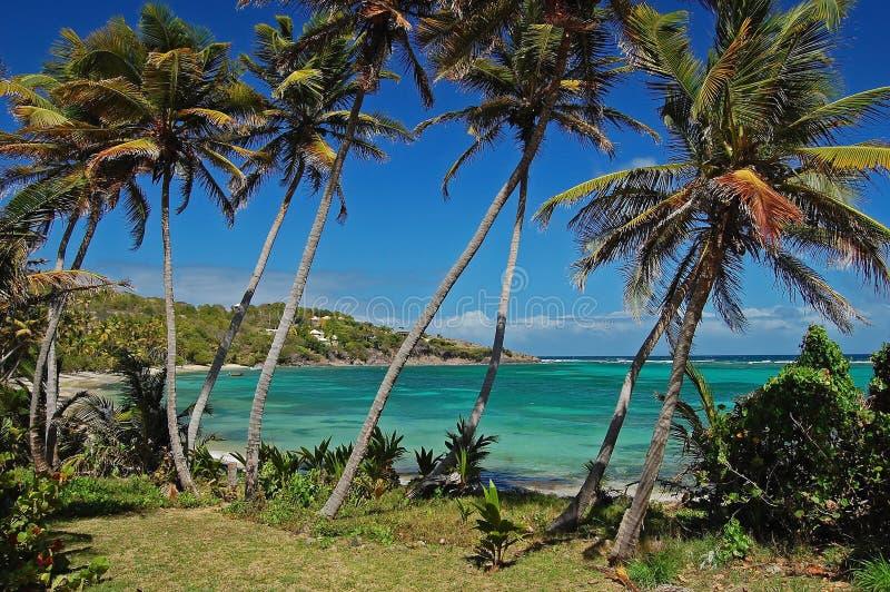 Les palmiers sur le compartiment d'industrie échouent sur Bequia photos stock