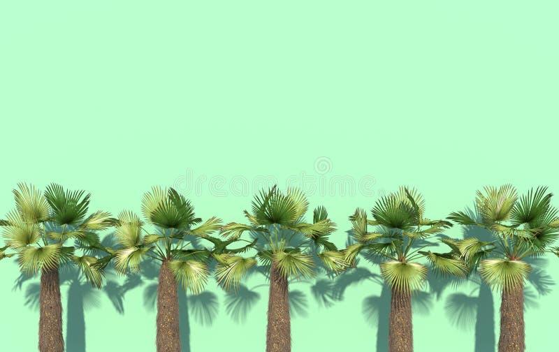 Les palmiers verts se tiennent dans une rangée sur un fond lumineux de turquoise avec l'espace de copie Illustration créative con illustration stock