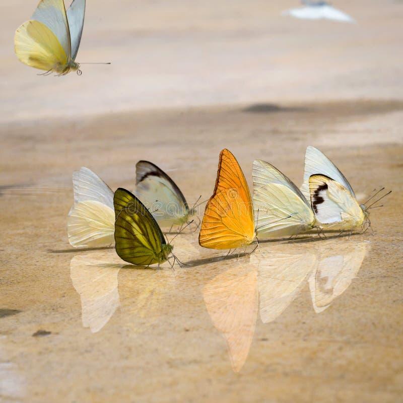 Les papillons apparaissent tôt pendant l'été photographie stock libre de droits
