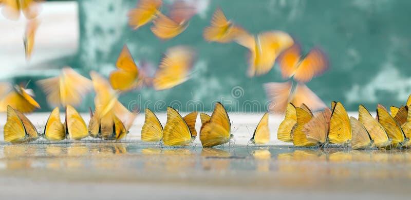 Les papillons apparaissent tôt pendant l'été photo libre de droits