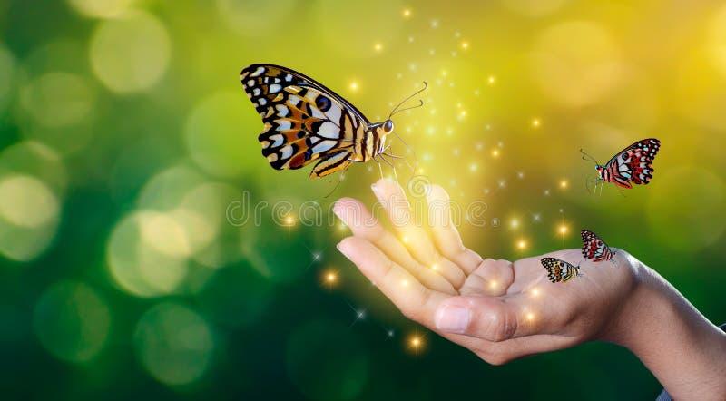 Les papillons sont aux mains des filles avec la rencontre douce éclatante de lumières entre un papillon humain de main photographie stock libre de droits