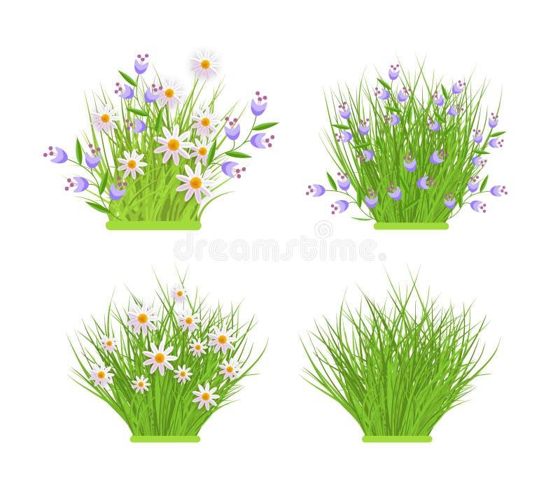 Les paquets floraux de ressort et d'été ont placé avec les camomilles blanches et les fleurs sauvages bleues sur l'herbe verte illustration libre de droits