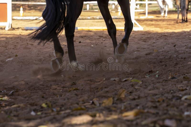 Les pattes brunes de cheval de trot sur la formation poncent la ruelle photo stock