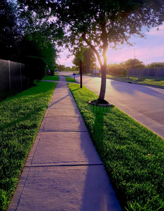les paumes de coucher du soleil sucrent la promenade de Texas Houston de terre photo libre de droits
