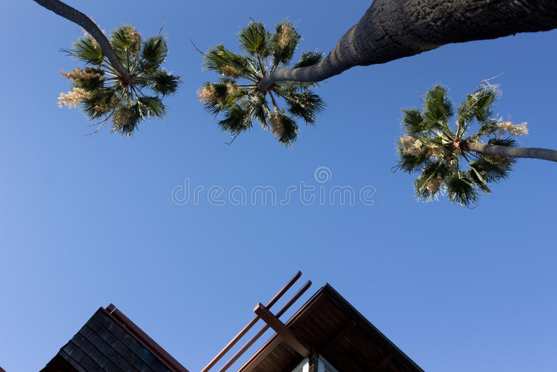 Les paumes et les crêtes dégagent la vue de ciel photographie stock