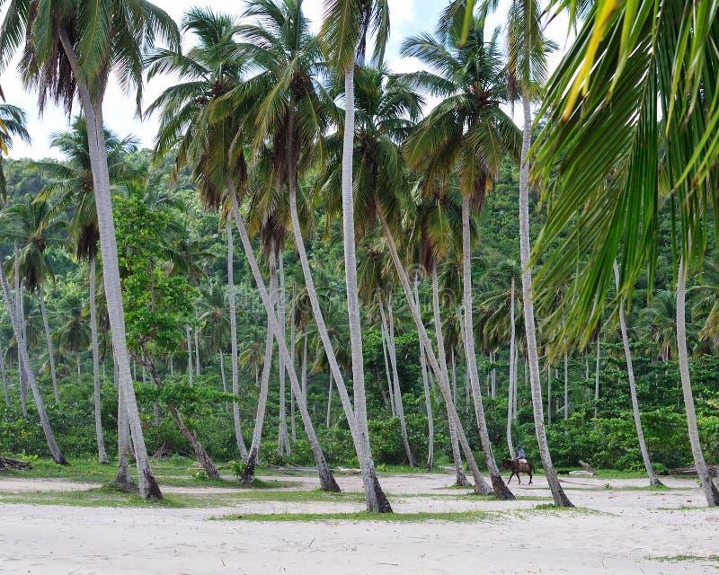 Les paumes grandes sur la plage, République Dominicana images libres de droits