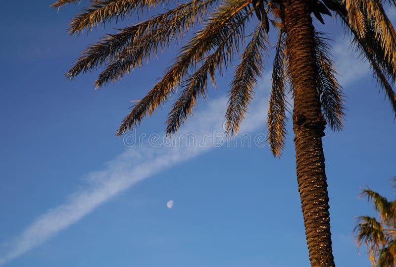 Les paumes, la lune et le jet cuisent à la vapeur sur le fond de ciel bleu photo libre de droits
