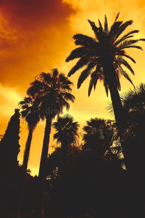 Les paumes silhouettent au fond orange de ciel de coucher du soleil rétro photo verical abstraite concept d'art de vintage image stock