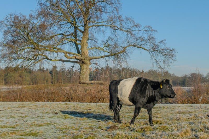 Les Pays-Bas - De Bilt photos libres de droits