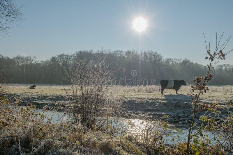 Les Pays-Bas - De Bilt photographie stock