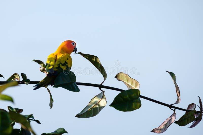 Les perruches sont sur les branches regardant le ciel bleu photographie stock libre de droits