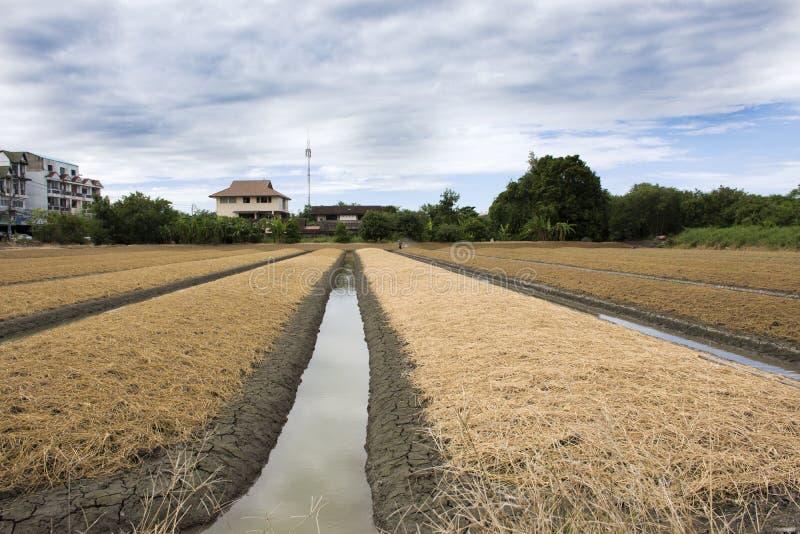 Les personnes thaïlandaises préparent la terre pour l'usine et le légume de plantation photo libre de droits