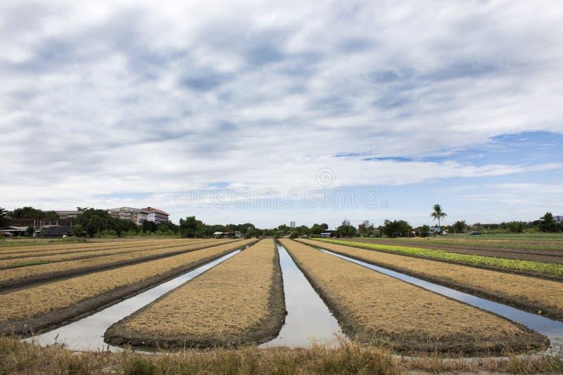 Les personnes thaïlandaises préparent la terre pour l'usine et le légume de plantation photos libres de droits
