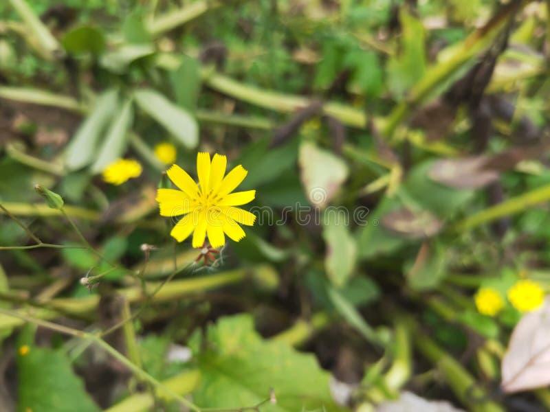 Les petites fleurs jaunes sont belles photo libre de droits