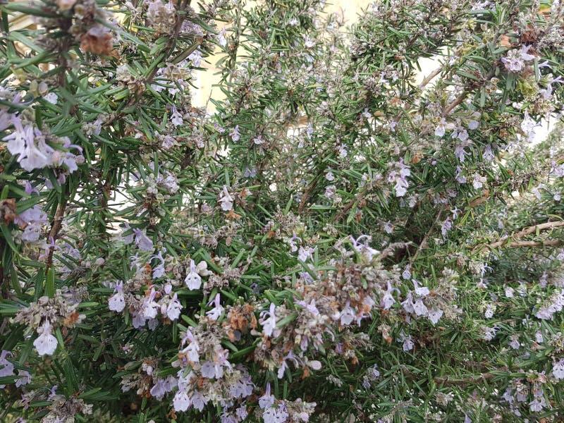 Les petites fleurs se développent photos stock
