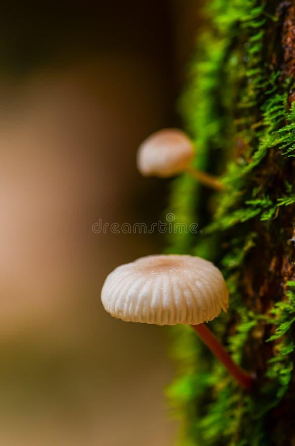 Les petits champignons se développent sur le tronc d'arbre délabré avec de la mousse verte photo stock