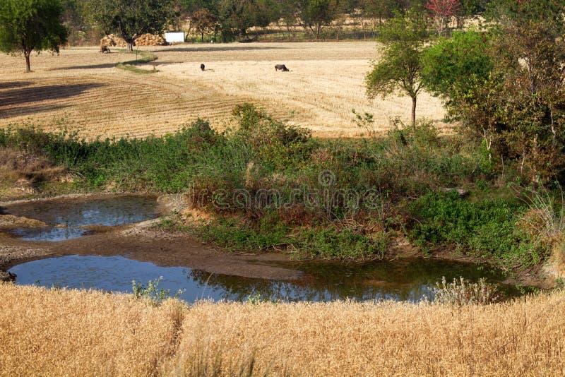 Les petits champs alternent avec des étangs, des routes et la ceinture en bois de frontière image libre de droits