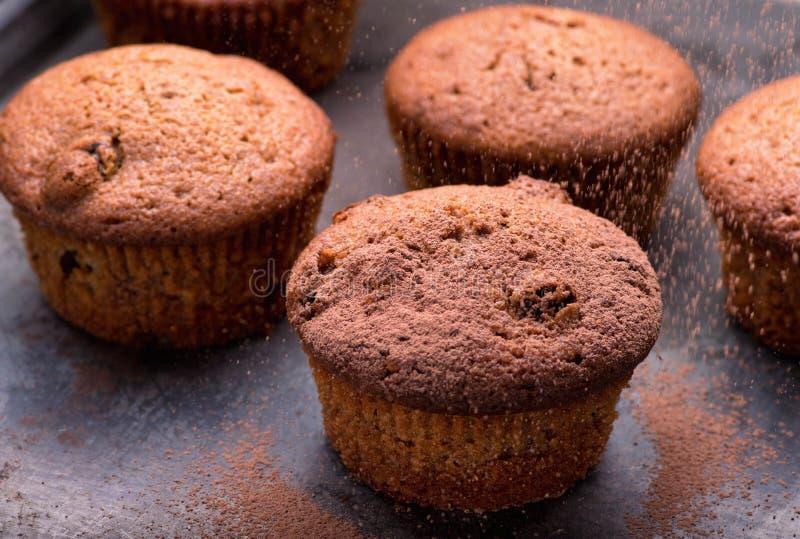 Les petits pains cuits au four frais de myrtille ont servi sur un four-plateau photographie stock