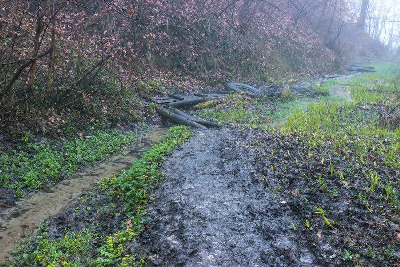 les phoques plantent sur les arbres près du chemin rural photographie stock