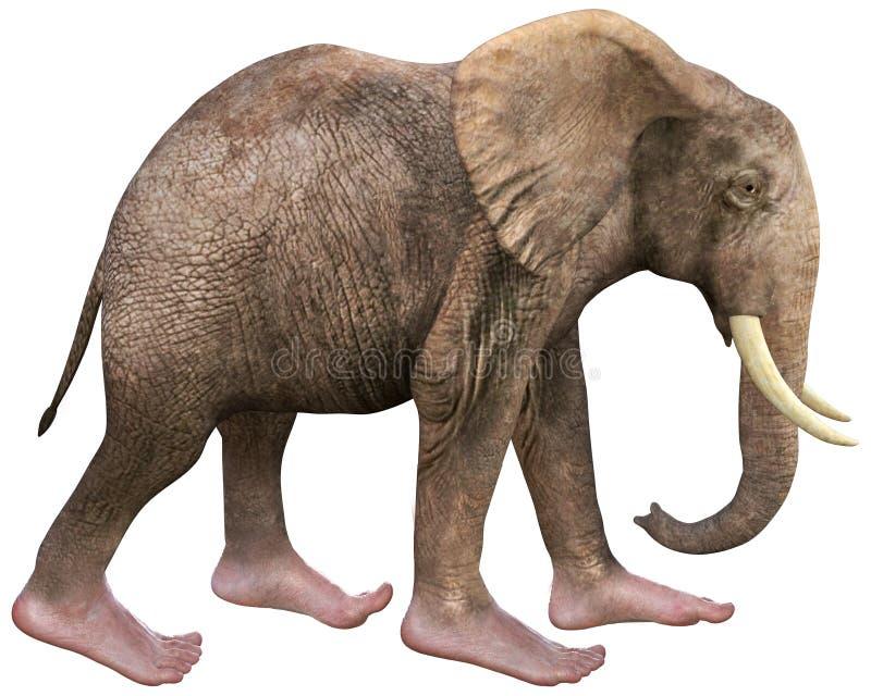 Les pieds humains d'éléphant drôle ont isolé illustration libre de droits