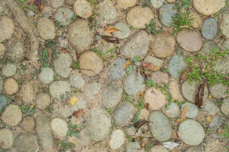 Les pierres, l'herbe et l'usine s'enracinent sur la terre, utilisée comme fond et texture image stock