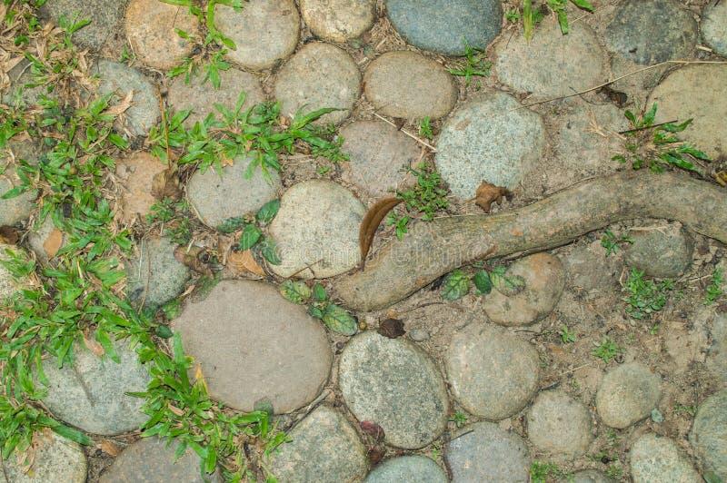 Les pierres, l'herbe et l'usine s'enracinent sur la terre, utilisée comme fond et texture images stock