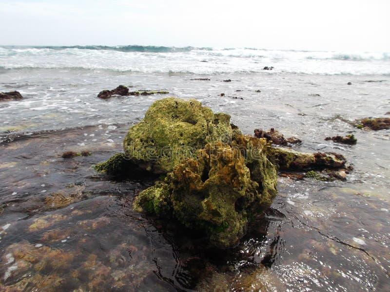 Les pierres ont couvert d'algue sur la côte de l'île de tortue au Venezuela images libres de droits