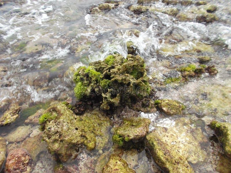 Les pierres ont couvert d'algue sur la côte de l'île de tortue au Venezuela images stock