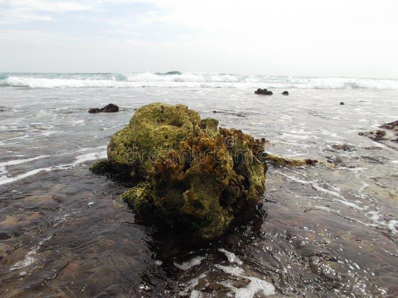 Les pierres ont couvert d'algue sur la côte de l'île de tortue au Venezuela photos libres de droits