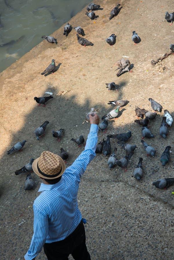 Les pigeons d'alimentation de jeune homme sur la terre sans compter que de la rivière photos libres de droits