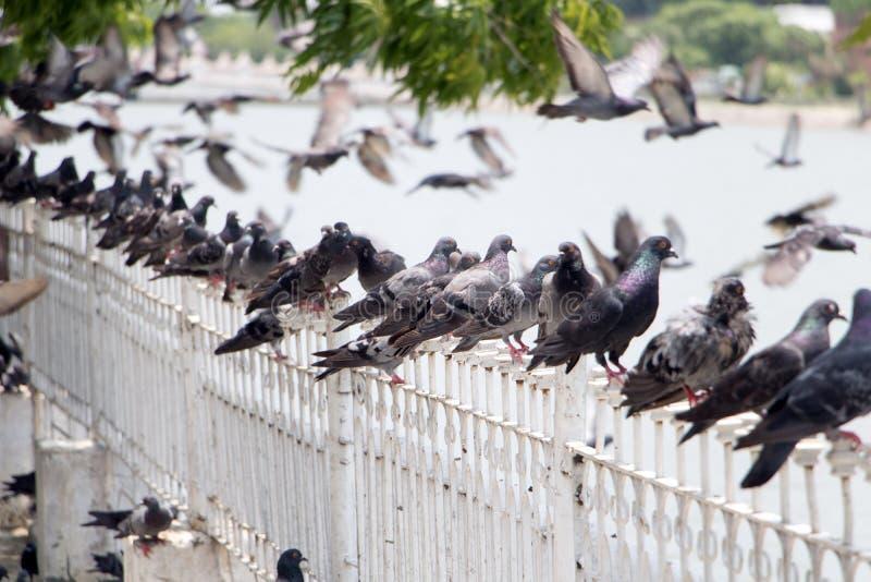 Les pigeons se tiennent sur la balustrade photo stock