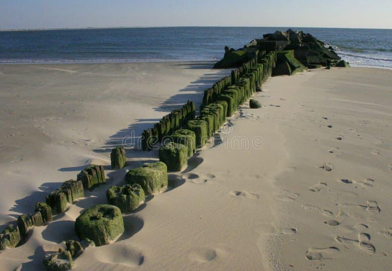Les piles de l'amarrage âgé qui a acquis des algas verts sur la plage Brighton Bich, Etats-Unis image libre de droits