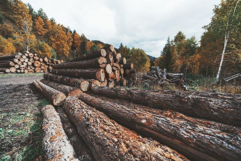 Les piles multiples de ouvre une session les bois images libres de droits