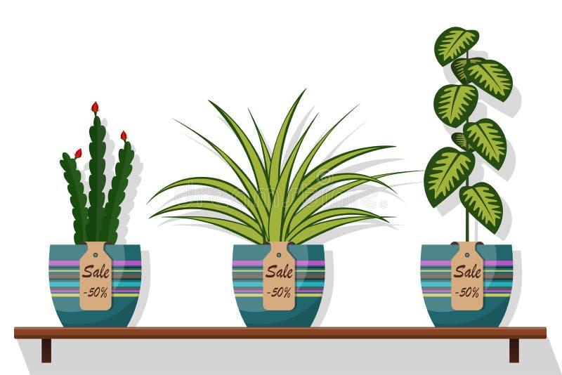 Les plantes et les fleurs de pièce dans des pots sur l'étagère avec la vente de labels, escomptent 50 pour cent Illustration plat illustration stock