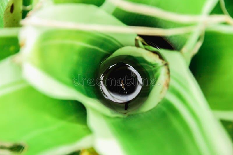 Les plantes ornementales est colorée images stock