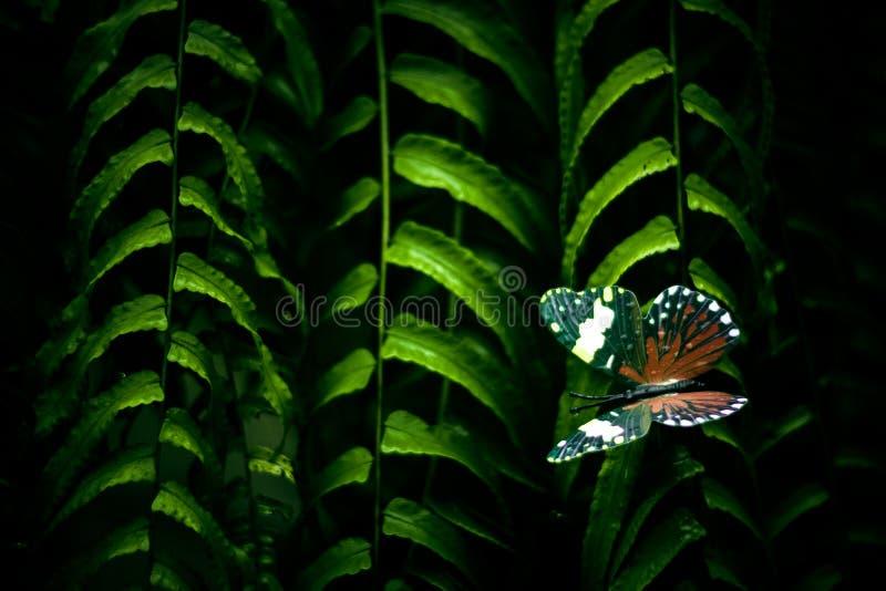 Les plantes tropicales donnent une consistance rugueuse dans le jardin photographie stock libre de droits