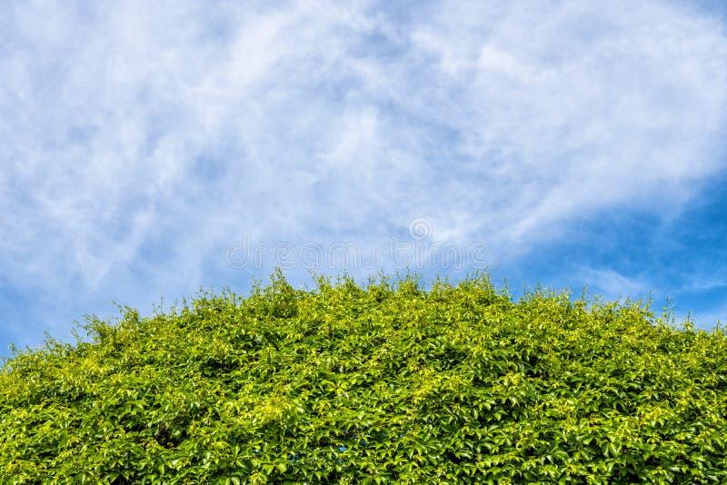 Les plantes vertes courbent le fond photo stock
