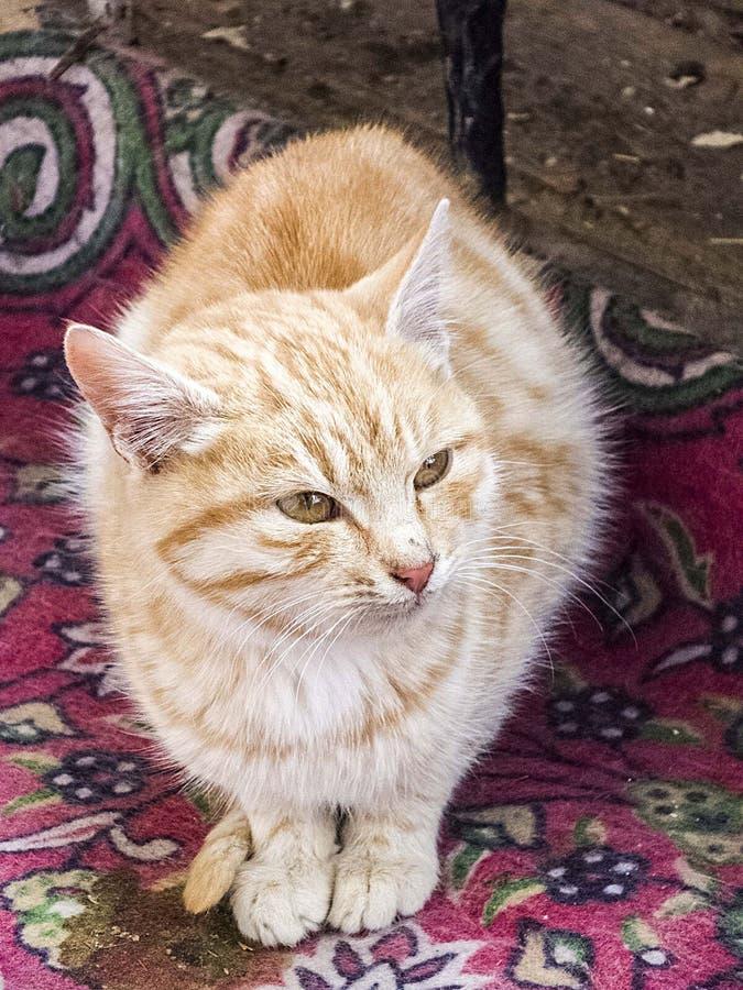 Les plots réflectorisés les plus beaux, étroitement les yeux différentes et originales de chat des photos de chat, photos libres de droits