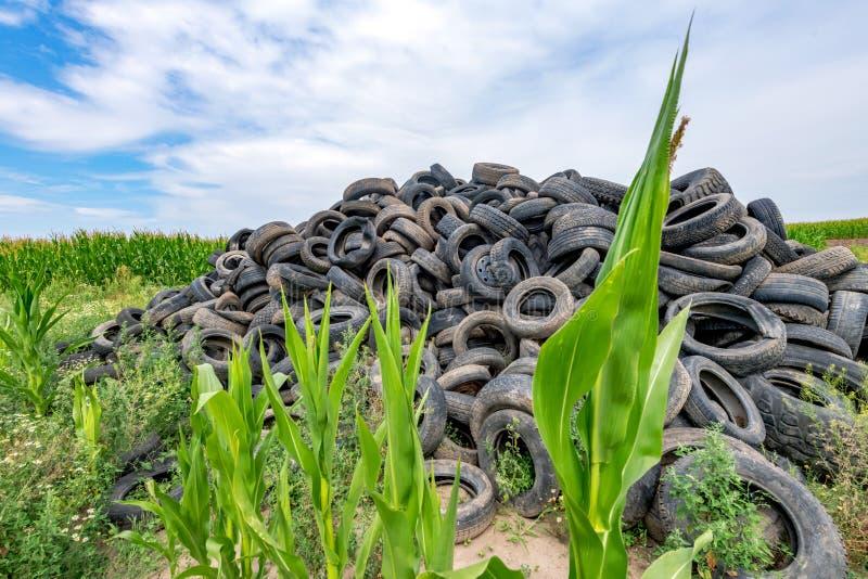 Les pneus de voiture cassés ont empilé jusqu'à une montagne dans un domaine de maïs image libre de droits