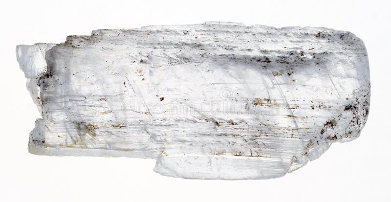 les poissons crus de gypse coupent la queue en cristal sur le blanc photo stock